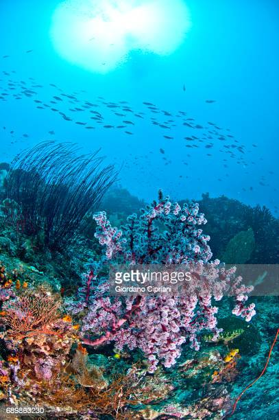 marine life of raja ampat, west papua, indonesia. - soft coral stock pictures, royalty-free photos & images