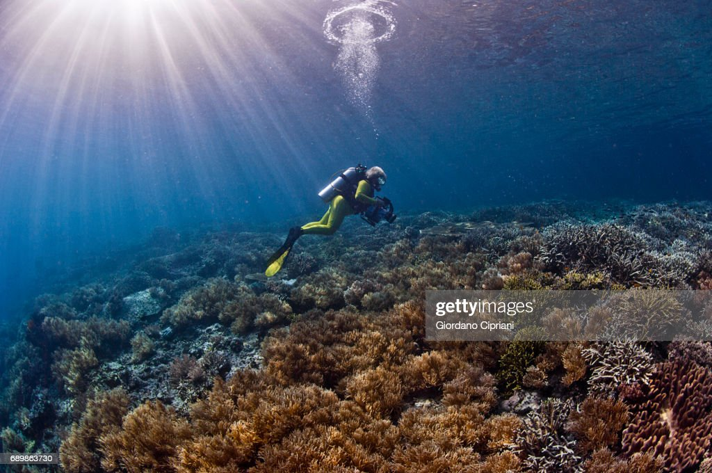 Marine life of Raja Ampat, West Papua, Indonesia. : Stock Photo