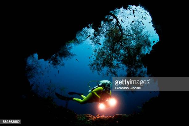 marine life of raja ampat, west papua, indonesia. - underwater diving stock pictures, royalty-free photos & images