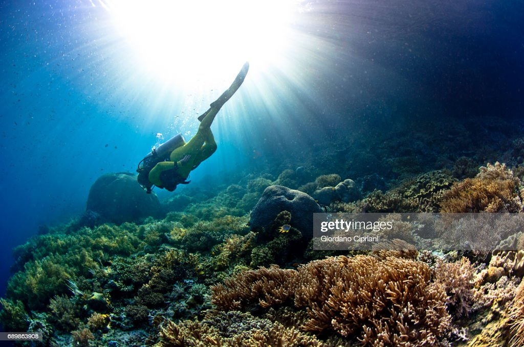 Marine Life Of Raja Ampat West Papua Indonesia Stock Photo - Getty