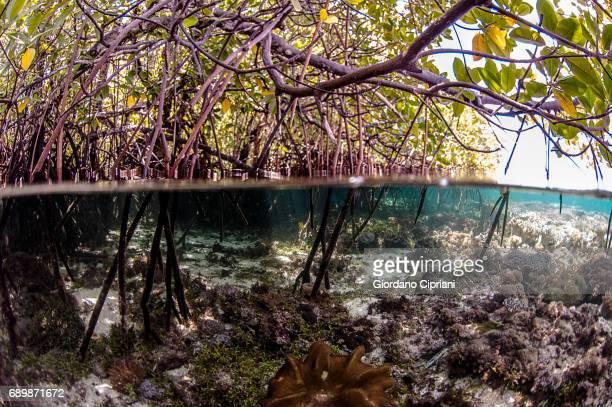 Marine life of Raja Ampat, West Papua, Indonesia.