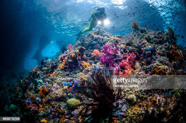 marine life of raja ampat, west papua, indonesia. - raja ampat islands stock photos and pictures
