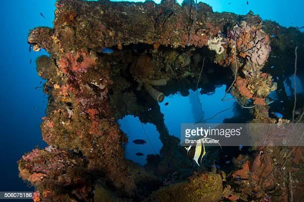 marine life on the hoki maru - lagon chuuk photos et images de collection