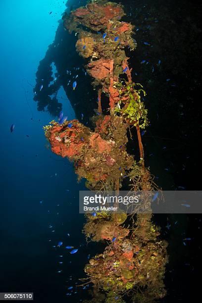 marine life on the rio de janeiro maru wreck - lagon chuuk photos et images de collection