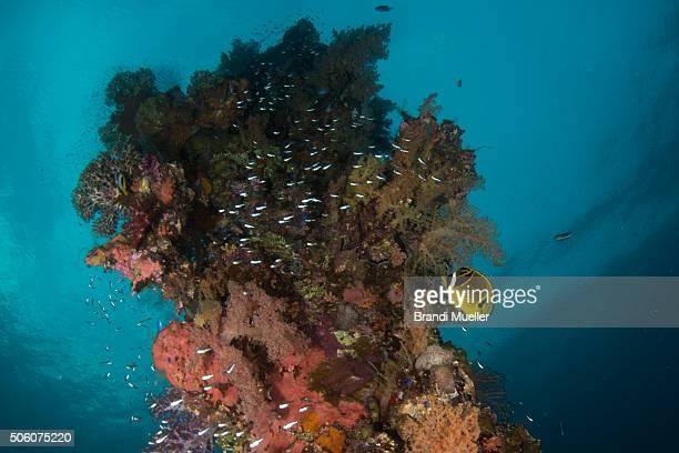 marine life on the sankisan maru - lagon chuuk photos et images de collection