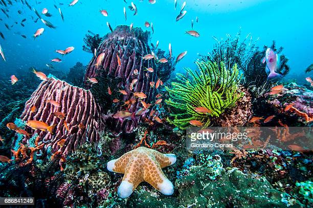 marine life - aquatic organism stock pictures, royalty-free photos & images