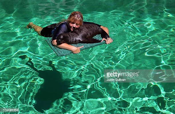 Marine mammal trainer Samantha Sanford holds an eightweek old sea lion pup named Jax on a floatation device in a pool as she trains her how to swim...