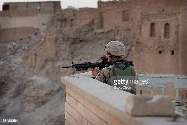 60 Top Marines Search For Insurgents In Hit Iraq Pictures