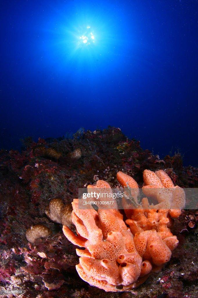 Marine sponge : Stock Photo