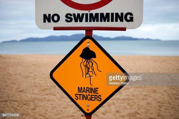 Marine Stinger warning sign on beach. No swimming sign. The Strand esplanade Townsville. Magnetic Island in the background