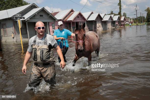 Marine veterans Chris Miller and Megan Lowry with the Wounded Veterans of Oklahoma rescue a horse from floodwater after torrential rains pounded...
