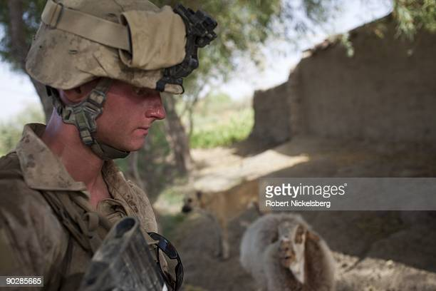 Marines from the 2nd Marine Division 2nd Light Armored Reconnaissance Battalion Delta Company carry out a security patrol of the local area on August...