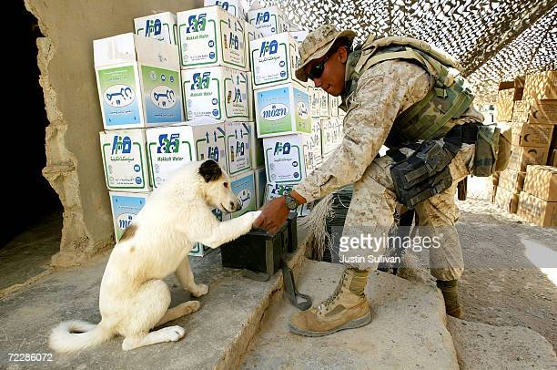 Marines Lance Corporal Jesus Serafel from the 2nd platoon Golf Company 2nd Battalion 7th Marines 1st Marines Division shakes hands with a dog named...