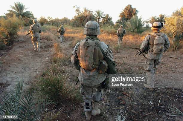 Marines of the 1st Light Armored Reconnaissance company part of 1st Battalion 3rd Marines search houses for insurgents on November 28 2004 in...