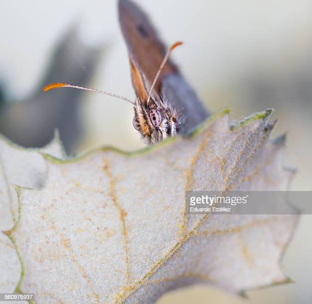Mariposa en una hoja