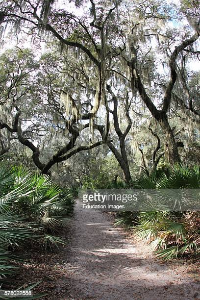 Maritime forest, live oak trees, palmetto, barrier island forest.