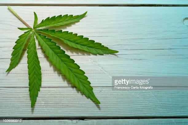 marjuana - marijuana leaf stock pictures, royalty-free photos & images
