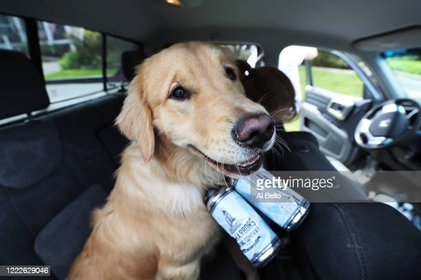 Mark and Karen Heuwetter fit their two dogs Buddy and Barley with an empty four pack of beer cans before a delivery to their customers on May 03 2020...