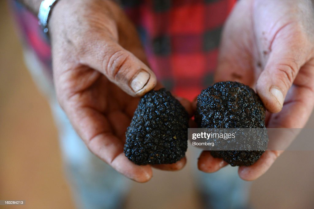 Mark Bowerman, farm manager at Truffles Australis Pty. Ltd., holds freshly cleaned truffles for a photograph in the processing room at the company's property near Deloraine, Tasmania, Australia, on Monday, Feb. 25, 2013. Australia's gross domestic product grew 3.6 percent last year, the best performance since a 4.7 percent expansion in 2007, data from the Australian Bureau of Statistics compiled by Bloomberg showed. Photographer: Carla Gottgens/Bloomberg via Getty Images