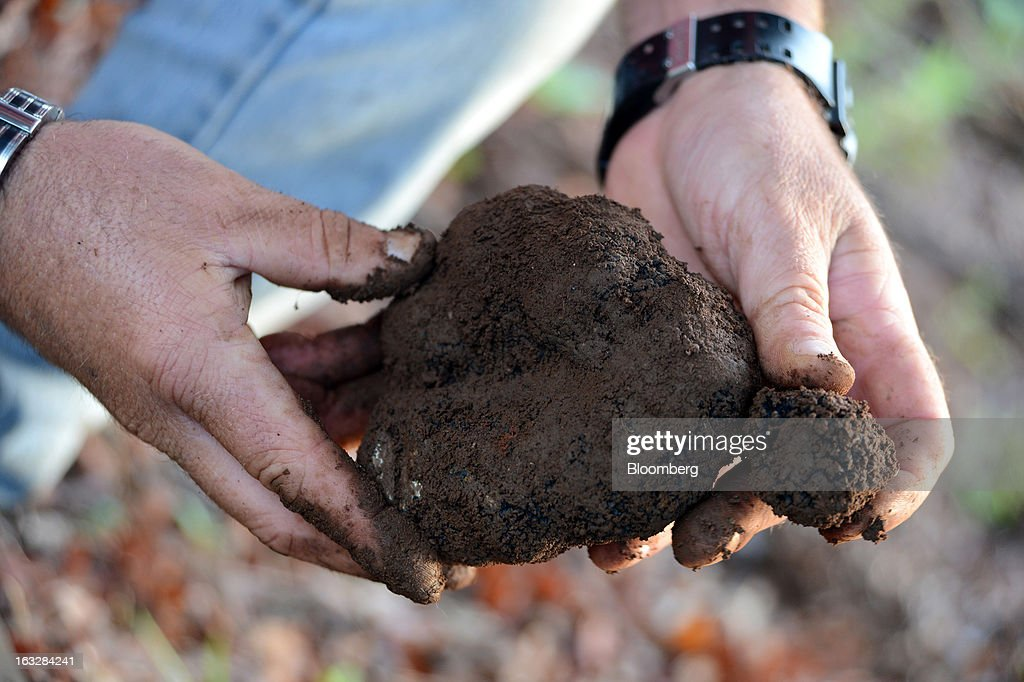 Mark Bowerman, farm manager at Truffles Australis Pty. Ltd., inspects freshly unearthed truffles at the company's plantation near Deloraine, Tasmania, Australia, on Monday, Feb. 25, 2013. Australia's gross domestic product grew 3.6 percent last year, the best performance since a 4.7 percent expansion in 2007, data from the Australian Bureau of Statistics compiled by Bloomberg showed. Photographer: Carla Gottgens/Bloomberg via Getty Images
