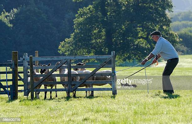 Mark Elliot and his sheepdog Pat running at the British National Sheep Dog Trials on August 6, 2016 in York, England. Some 150 of the best sheepdogs...