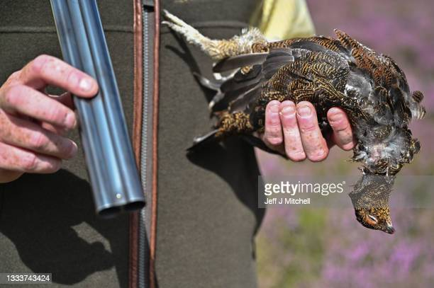 Mark Ewart holds his freshly shot bird on first day of the grouse shooting season at Roxburghe Estates on August 12, 2021 in Duns, Scotland. The UK's...