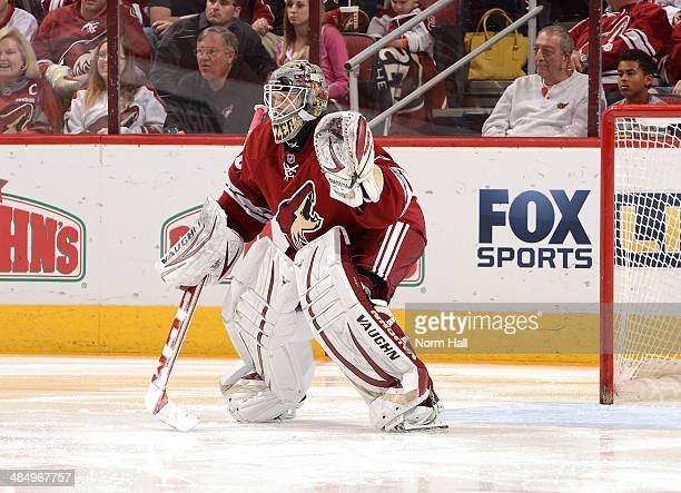 Mark Visentin of the Phoenix Coyotes gets ready to make a save against the San Jose Sharks at Jobingcom Arena on April 12 2014 in Glendale Arizona