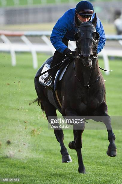 Mark Zahra riding Kuro gallops during a Moonee Valley trackwork session at Moonee Valley Racecourse on September 1 2015 in Melbourne Australia