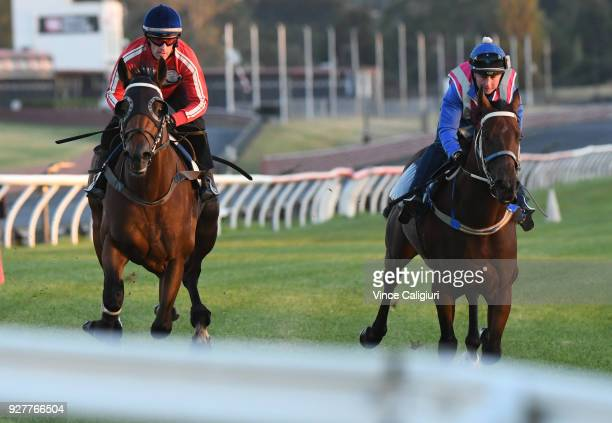 Mark Zahra riding Merchant Navy during a trackwork session at Sandown Lakeside on March 6 2018 in Melbourne Australia Merchant Navy is favourite for...