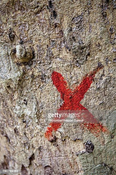 marked tree trunk - x art stock-fotos und bilder