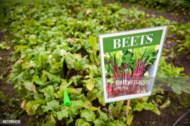 Marker for a plot of land growing beets