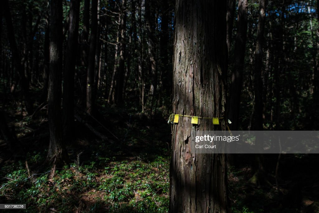 A marker is left on a tree near the scene of an apparent suicide in Aokigahara forest, on March 13, 2018 in Fujikawaguchiko, Japan. Aokigahara forest lies on the on the northwestern flank of Mount Fuji and in recent years has become known as one of the world's most prevalent suicide sites. The density of the forest is believed to be a contributing factor with people often tying string to trees to find their way back to a path in case they change their mind. In 2010, officials recorded more than 200 attempted suicides in the forest with attempts said to increase during the end of the Japanese fiscal year. In recent years, local officials have stopped publicising the numbers in an attempt to decrease Aokigahara's association with suicide.