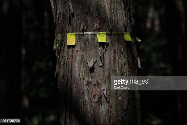 A marker is left on a tree near the scene of an apparent suicide in Aokigahara forest on March 13 2018 in Fujikawaguchiko Japan Aokigahara forest...