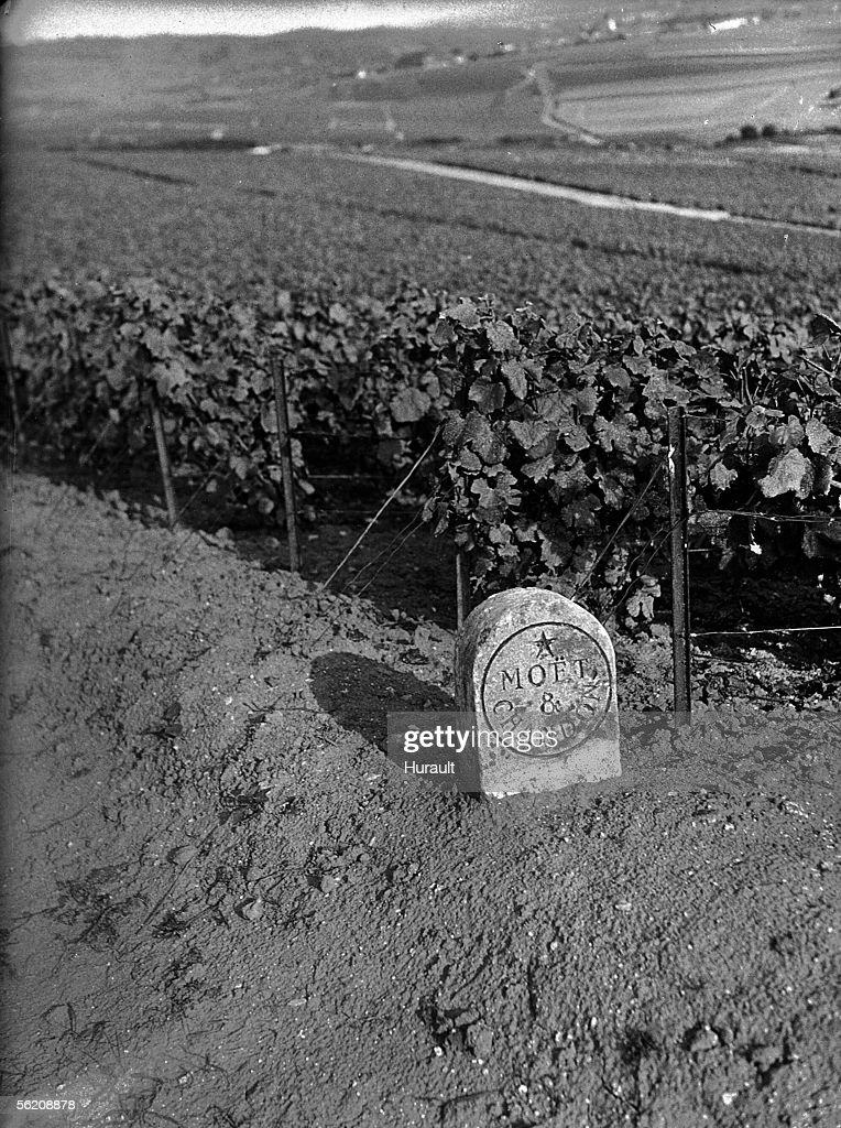 Marker of the vineyard Moet et Chandon in Champa : News Photo
