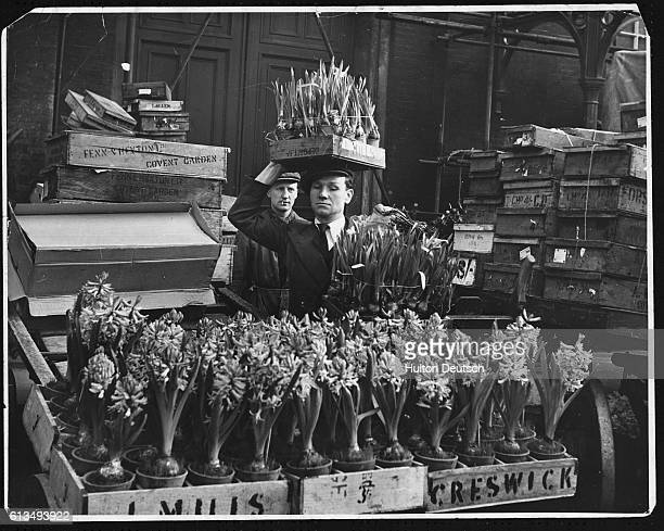 A market porter balances a crate of potted daffodils on his head