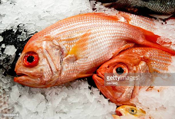 market red snapper - redfish stock photos and pictures