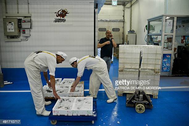 Market sellers separate boxes of fishes at the Lisbon's wholesale market in Loures outskirts of Lisbon on May 17 2014 Portugal exits a threeyear...