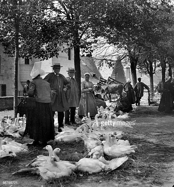 Market to the gooses Thouars by 1910 LL24633 In STEREO