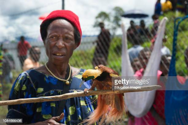 Market vendor selling male Raggiana Bird of Paradise Mt Hagen Papua New Guinea