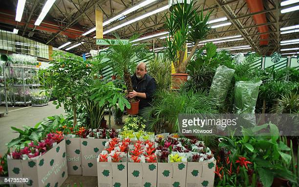 A market vendor works at his stall in New Covent Garden Flower Market on February 11 2009 in London England New Covent Garden Flower Market is...