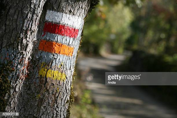 Marks painted on a tree for hikers