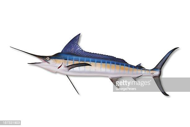Marlin with Clipping Path