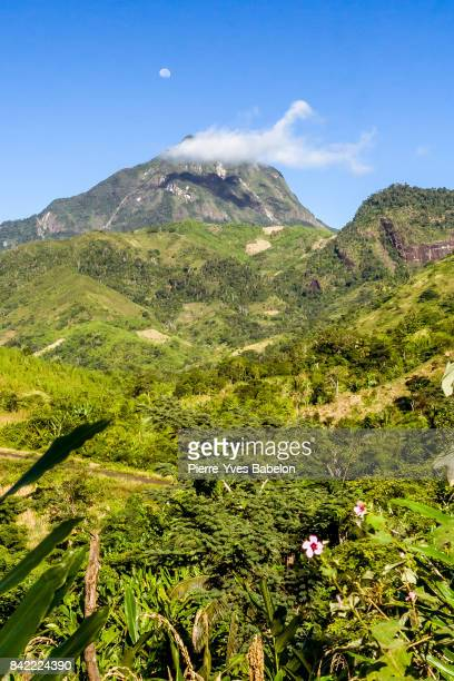 marojejy mount - pierre yves babelon madagascar stock pictures, royalty-free photos & images
