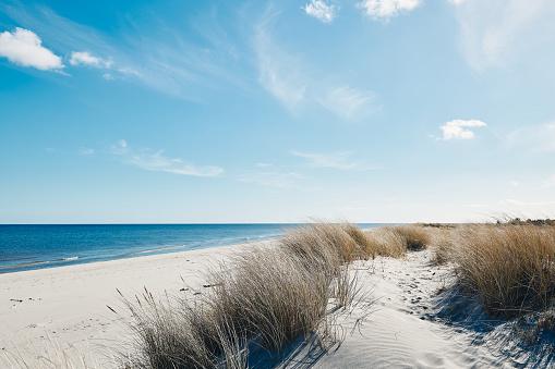 Marram grass at the beautiful beach near the coastline of the blue sea in northern Denmark. 1161428266