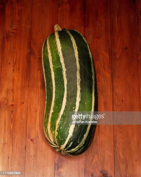 marrow vegetable - marrow squash stock pictures, royalty-free photos & images