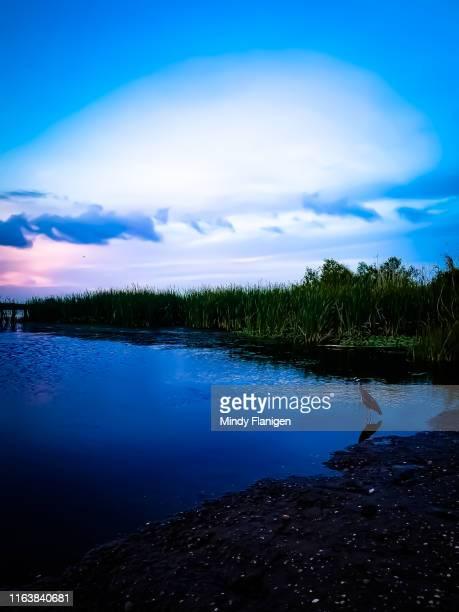 marsh bird - estados de la costa del golfo fotografías e imágenes de stock
