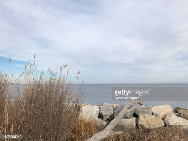 marsh grass, driftwood and rocky shore along the chesapeake bay, north point state park - maryland us state stock pictures, royalty-free photos & images