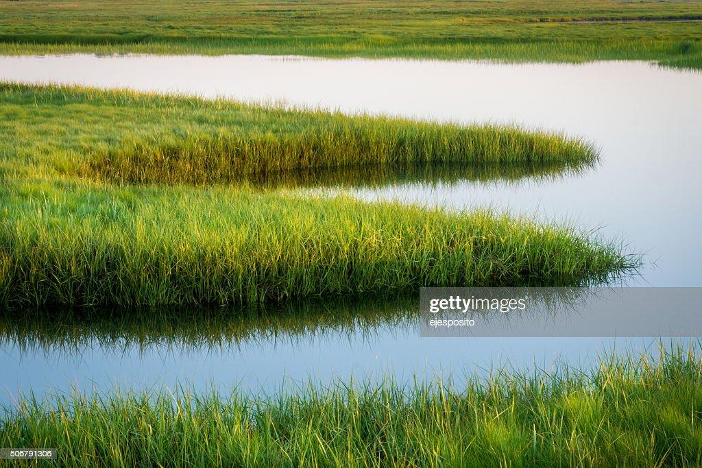 Resultado de imagen de marsh