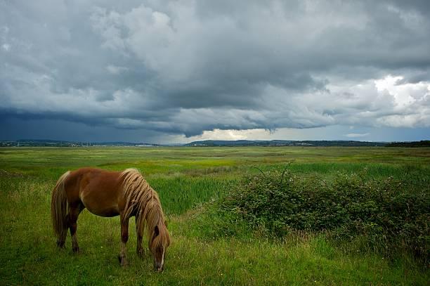 Marsh horse