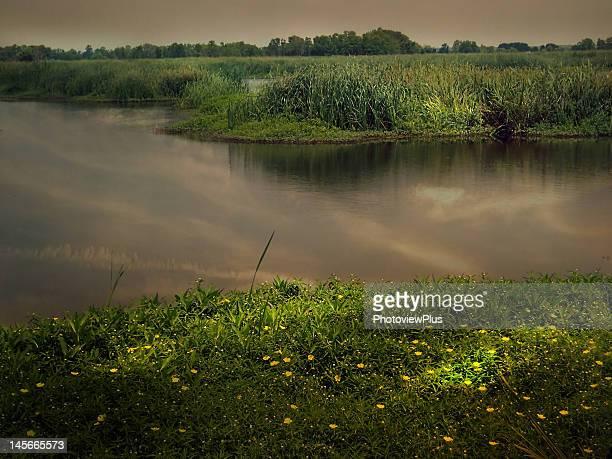 marsh in shadows and light - caroline du sud photos et images de collection